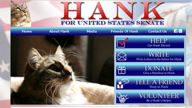 Hank the Cat