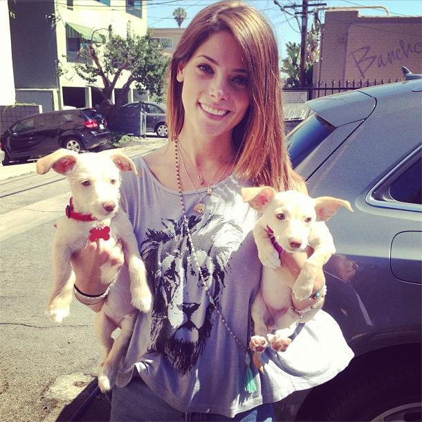 Ashley Greene, New Puppies