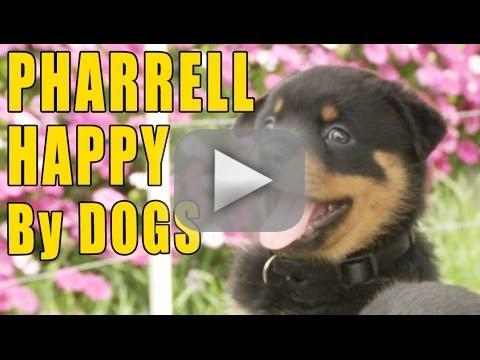 Puppies Recreating 'Happy'