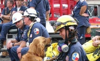 Final 9/11 Rescue Dog Dies: Goodbye, Bretagne…