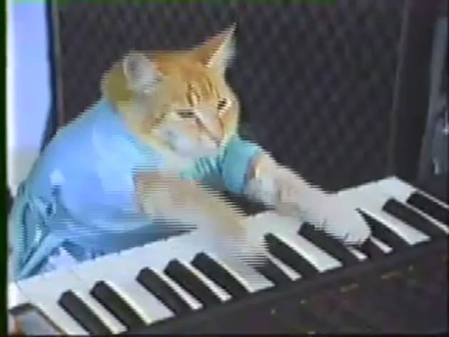 Where can i buy keyboard cat toy