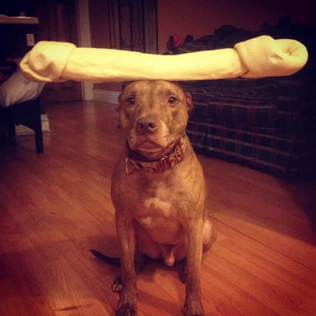 Dog Balances Bone