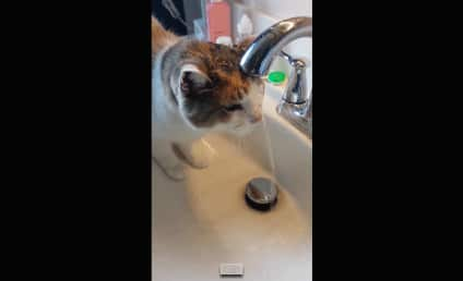 Thirsty Cat Dunks Entire Head Underwater Just to Take a Drink