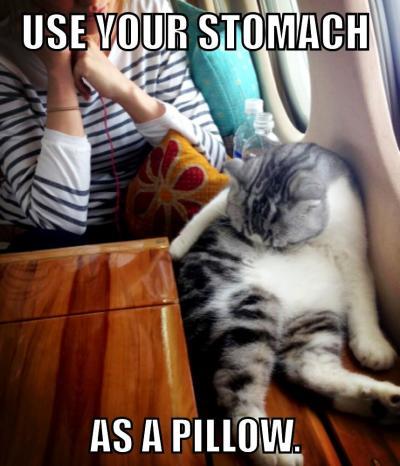 Taylor Swift Cat Meme