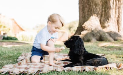 Prince George Feeds His Dog Ice Cream, Animal Rights Group Outraged