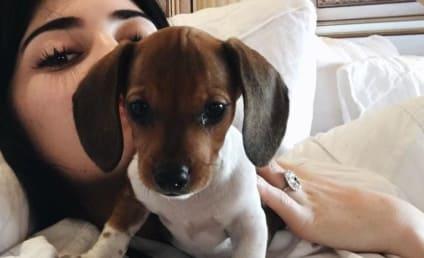 Kylie Jenner Got a New Puppy!!!!!!!!!!!!!!!!!