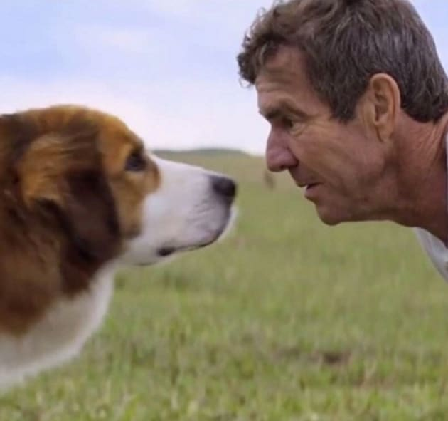 A Dog S Purpose Peta Tmz