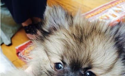 Miley Cyrus Celebrates New Dog, Smokes Pot