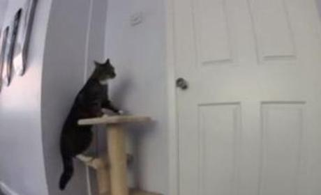 Cat and Dog Team Up: Let's Escape!