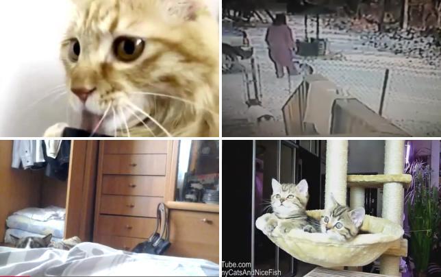 Cat licks vacuum cleaner