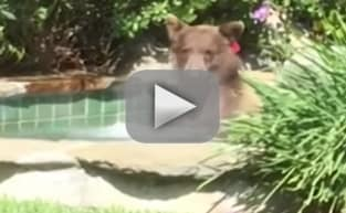 Bear Takes Over Man's Hot Tub, Drinks His Margarita, Becomes Internet Darling