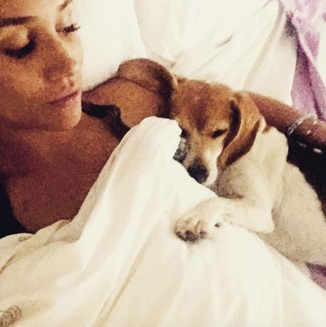 Hollywood Actress Rescue Dog