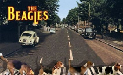 #DogBands Go Viral, Crack Up Internet: Meet The Beagles!