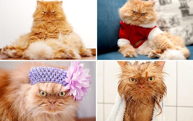 Meet Garfi The Grump Cat Photo