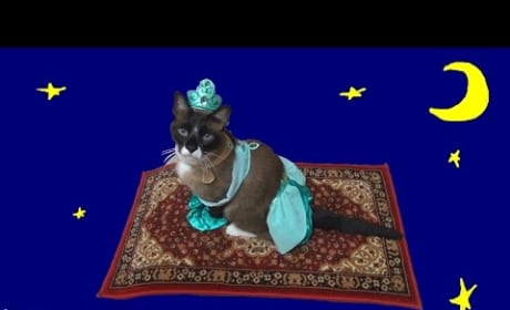 Cat Dresses Up, Rides Roomba
