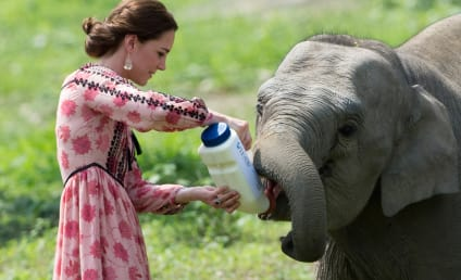 Kate Middleton Feeds Baby Elephant, Achieves World Peace