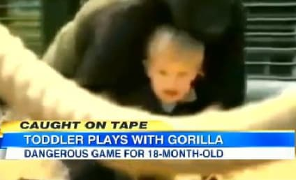Gorilla Carries Toddler, Plays With Her Like Doll in Amazing Viral Video