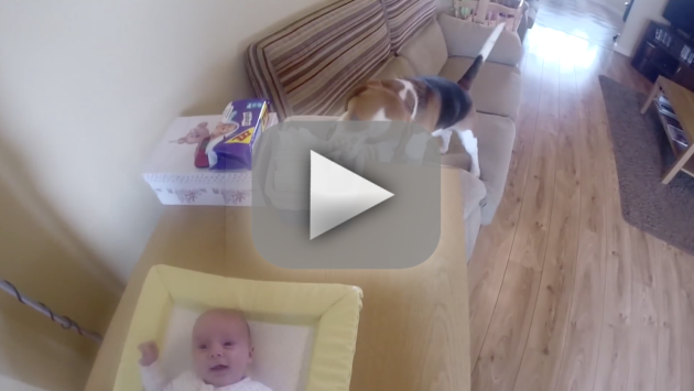 Dog Helps Change Baby's Diaper