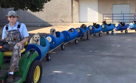 Man Rides Rescue Pets Around in Custom-Built Dog Train