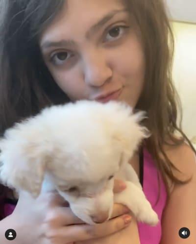 Sophie, dog