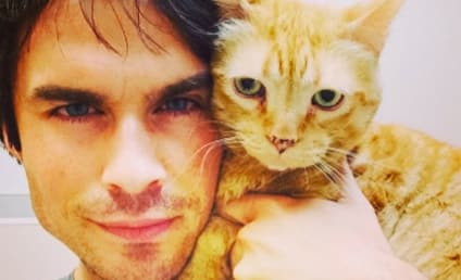 National Cat Day: 11 Stars Who are (Not Totally) Crazy Cat People