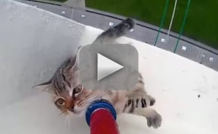 Inspiring Cat Rescue: Caught on Camera!