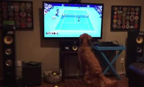Dog FLIPS OUT While Watching Venus vs. Serena