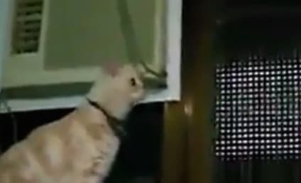 VIDEO: Cats Try, Fail Miserably to Jump Over Stuff