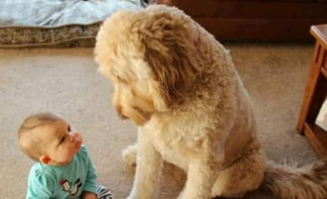 Baby vs. Dog!