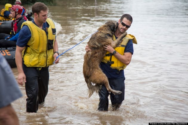 Fireman Rescues Dog