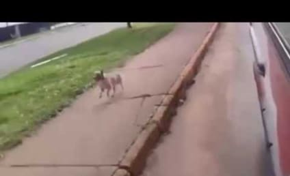 Dog Chases Owner in Ambulance: Wait for Me!!!!!