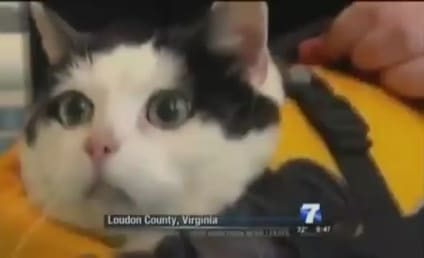 News Anchor Loses It During Story on Swimming Cat