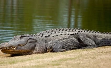 Florida Man Found in Gator, Cause of Death Unclear