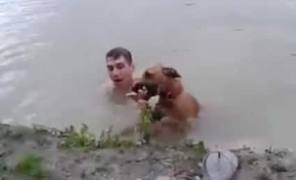 Heroic Dog Leaps Into Action, Saves Non-Drowning Owner