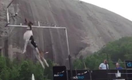 Dog Breaks Vertical Jump Record