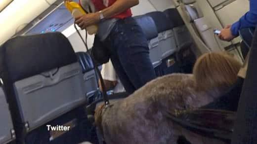 Dog Poops on Plane