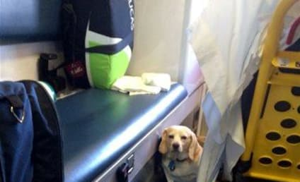 Dog Refuses to Leave 85-Year Old Owner's Side, Hitches Ride on Ambulance