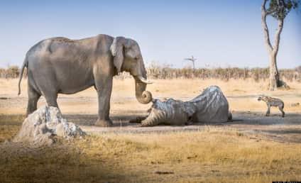 Elephant Mourns Dead Friend, Breaks Heart of Every Internet User