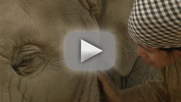 Woman Sings Elephant to Sleep