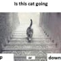 Cat Stairs Photo