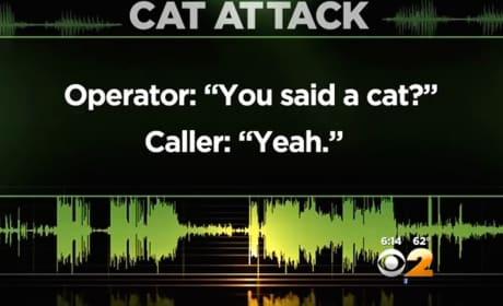 """Man Calls 911 Over """"Aggressive"""" Pet Cat"""