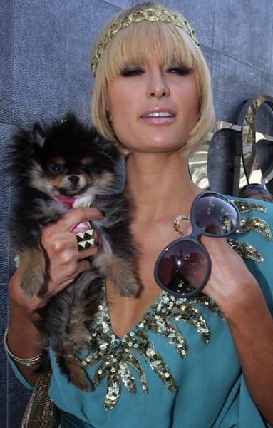 Paris Hilton, Dog