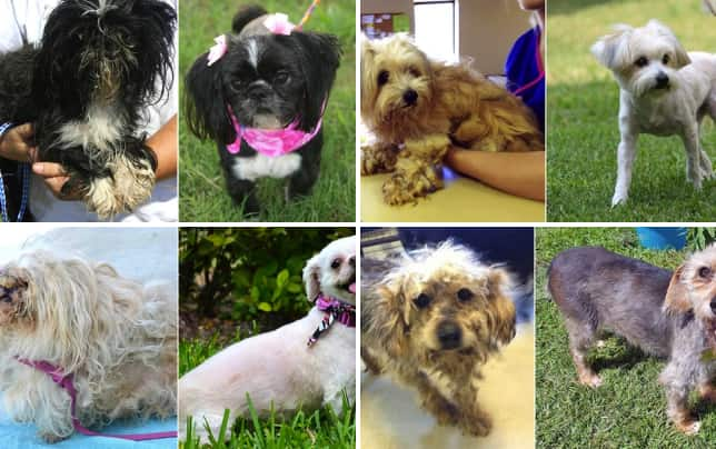 Shelter dog beauty contest photos what a transformation