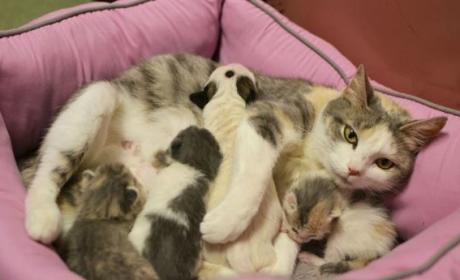 Cat Adopts Puppy