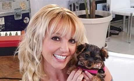 Britney Spears, Dog Hannah