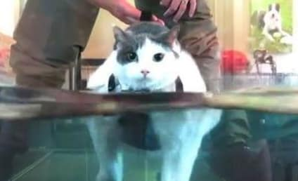 Overweight Cat Runs on Treadmill, Seeks to Shed Pounds