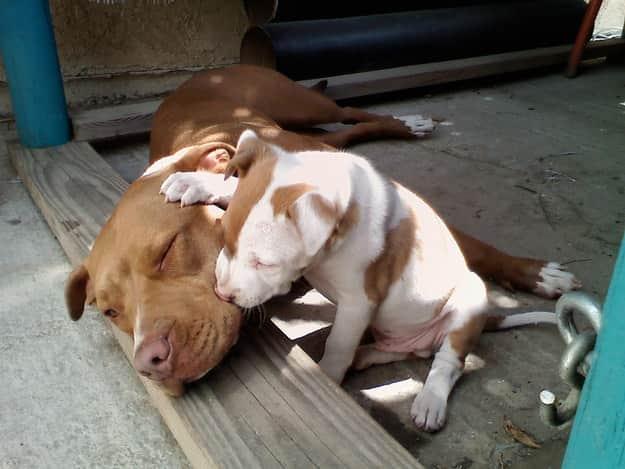 Wake up, dad!