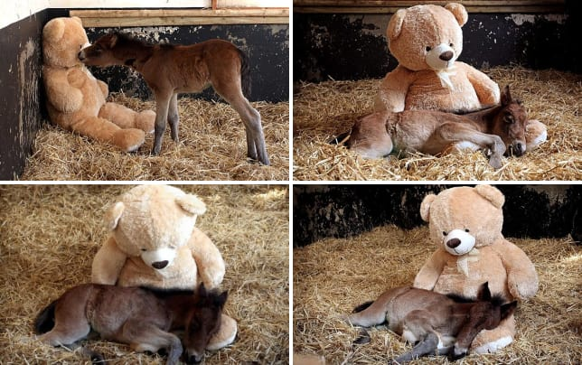 Horse befriends stuffed bear horse makes unexpected friend