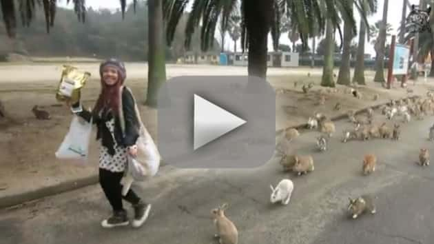 Rabbits SWARM Young Girl in Japan