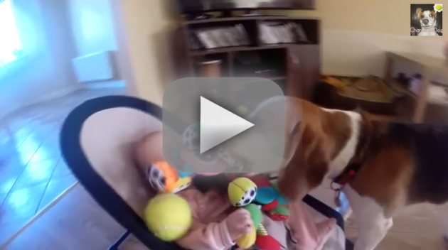 Guilty Dog Makes Amends with Baby